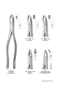 (youngdent) Extracting Forceps (102)